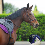 Know everything about horse head collars before using